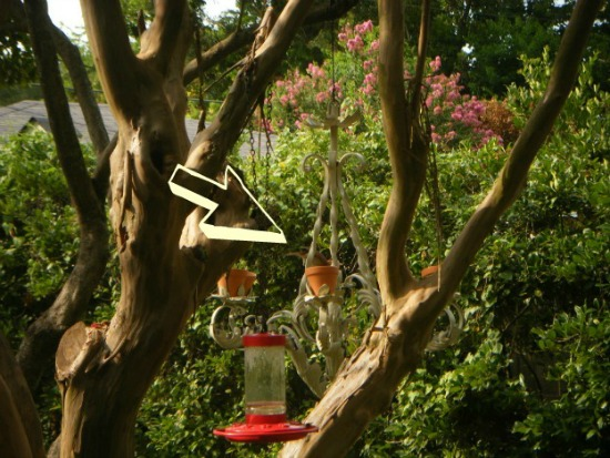 chandelier-bird-feeding2