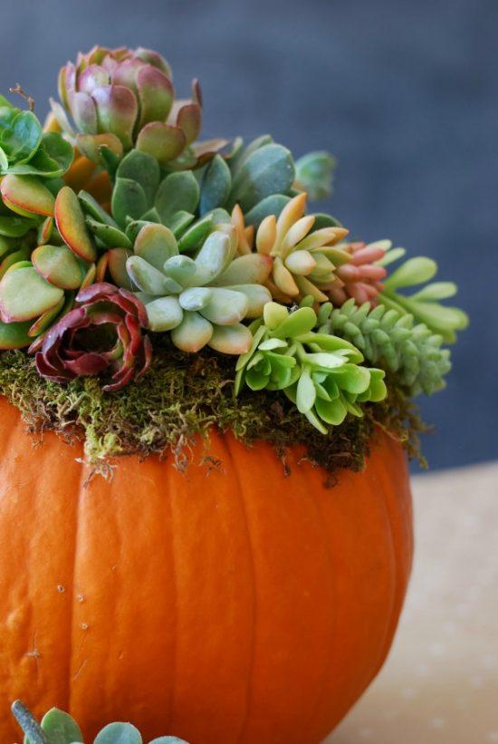 pumpkin-succulent-arrangement-simplyhappenstance-com-136