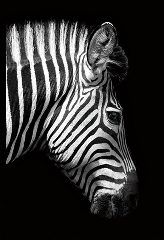 Beautiful Black & White Canvas Prints