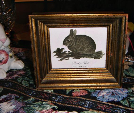 bushy-tail-rabbit