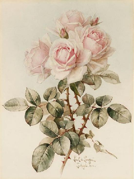 rose-bouquet-Paul