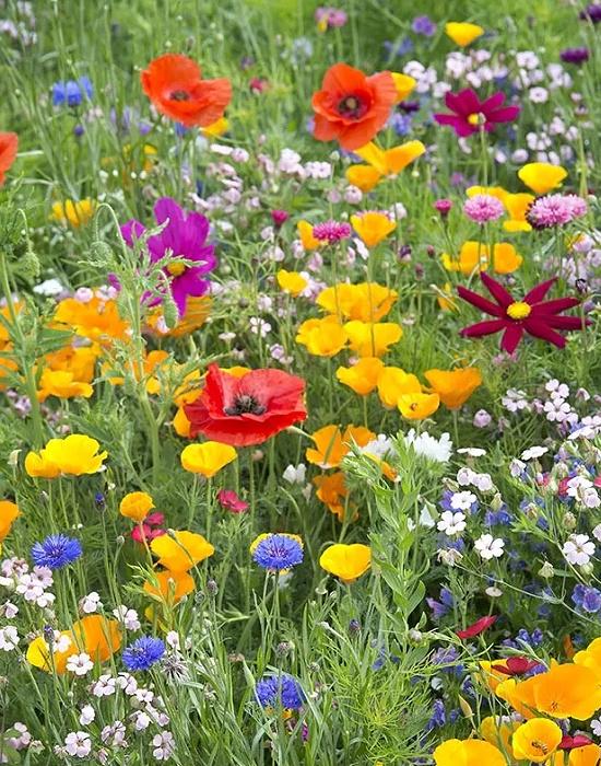 wildflowers-summer (1)