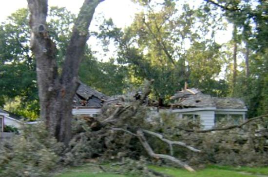 fallen-tree-on-house