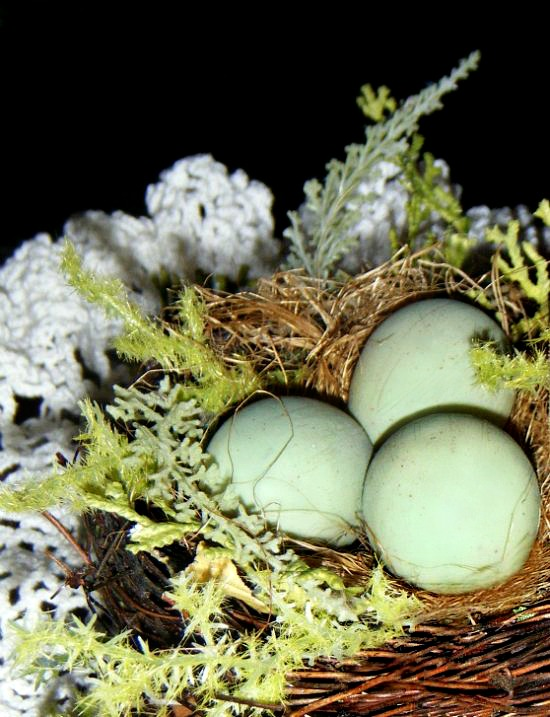 bird-nest-easter