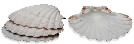baking-shell