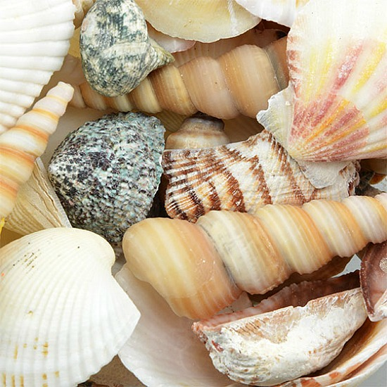decorative-shells