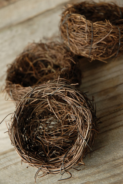 bird-nests-3-vine-9-nests-4