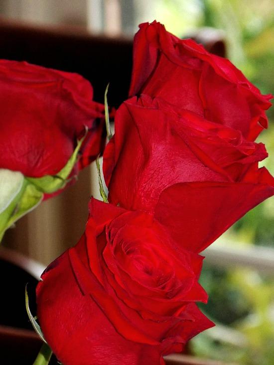 roses-Kroger