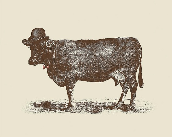 Sir_Cow_Canvas_Print0
