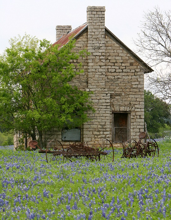 Texas-farmhouse-bluebonnets