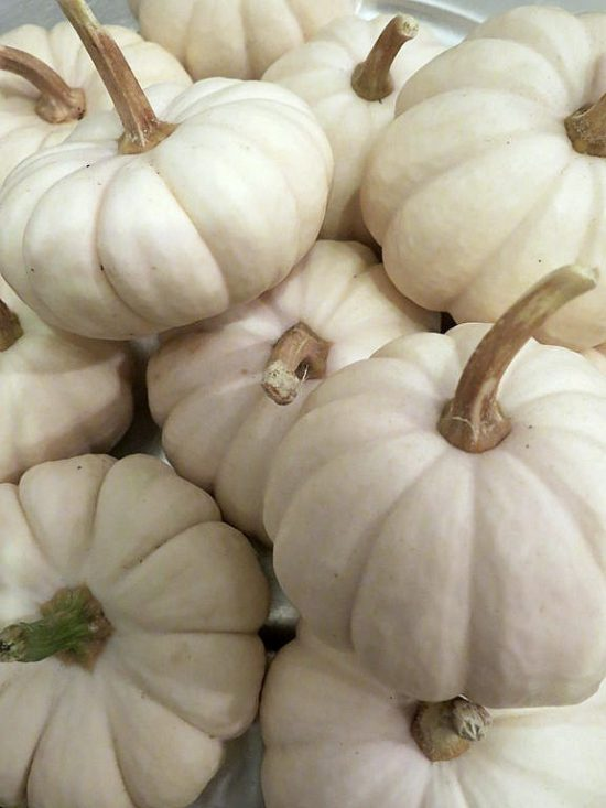Cucurbita_pepo_small_edible_White_Pumpkins_9.16
