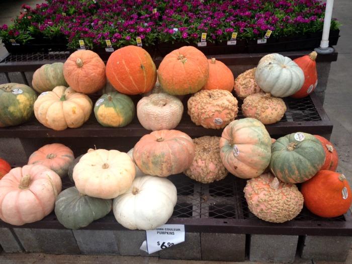 couleur-pumpkins-lowes
