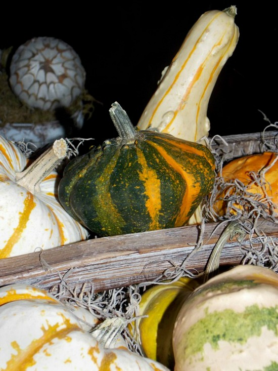fall-assorted-gourds