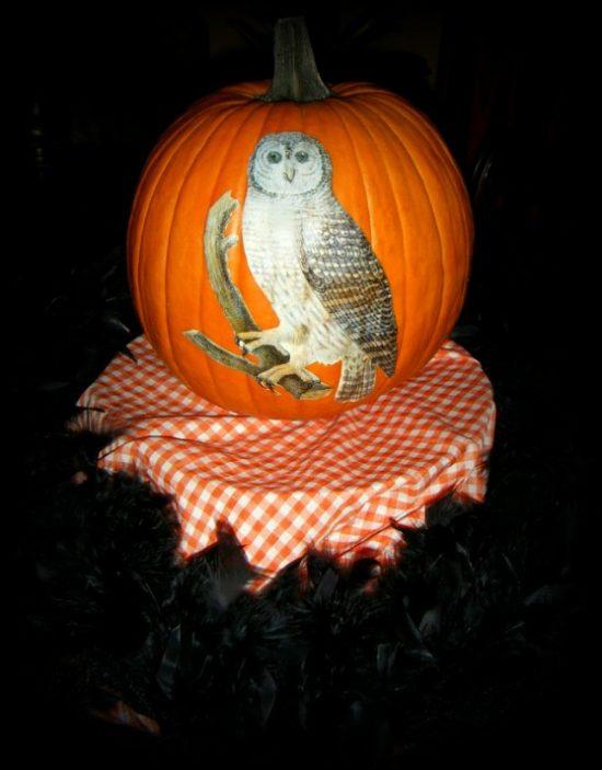 no-carve-pumpkin