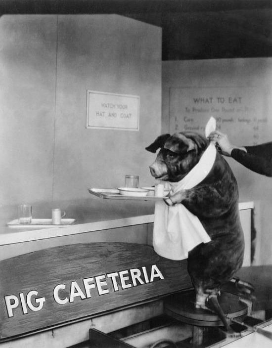 Pig Cafeteria Print