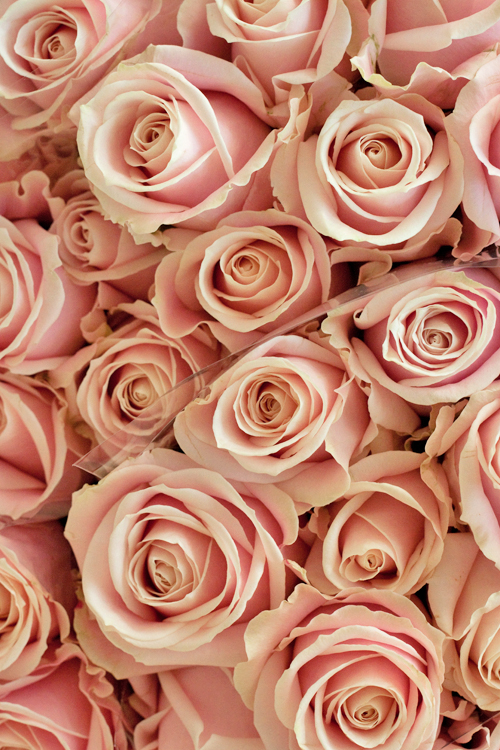 Sweet-Avalanche-Roses-Flowerona-a