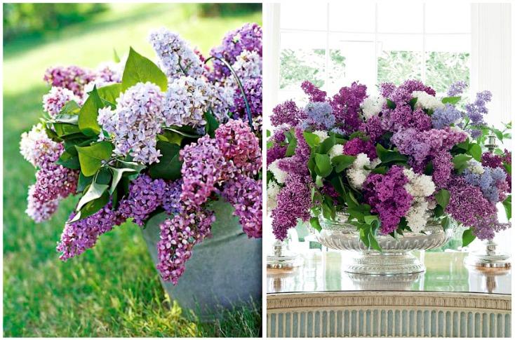 spring-flowers-purple1