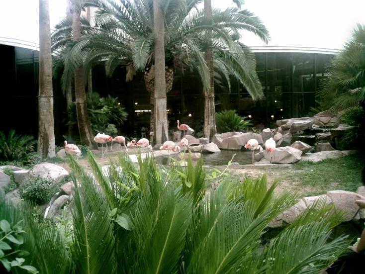 Flamingo-hotel-Vegas