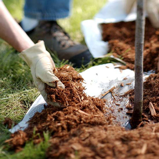 how-to-mulch