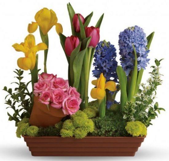 spring-flowers-in-bloom