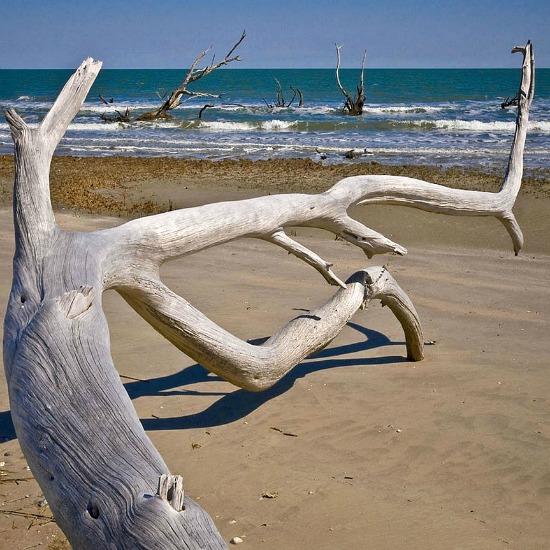 Driftwood_on_the_beach,_Louisiana