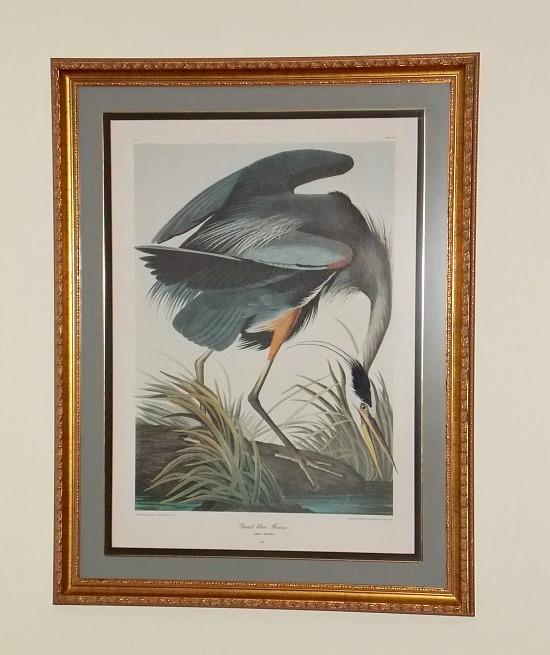 Great-blue-Heron-Audubon