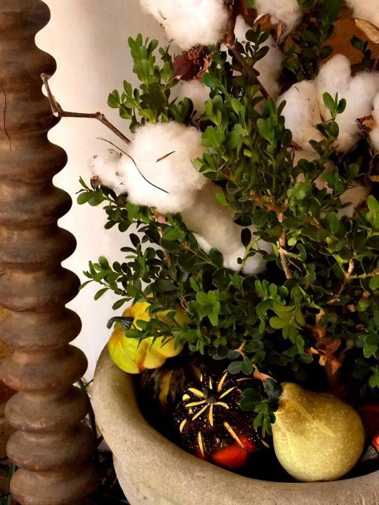 gourds-boxwood-cotton1
