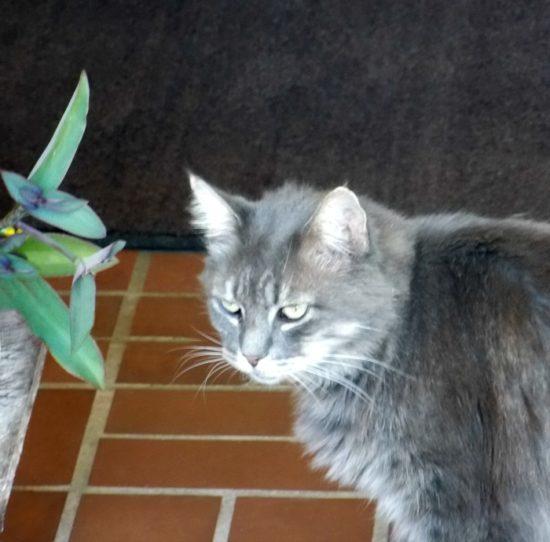 sir-kitty-kat