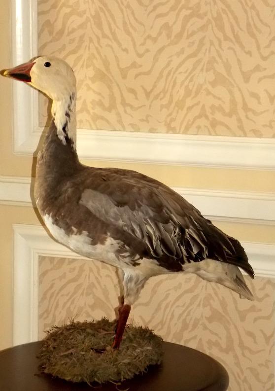 Christmas-Goose-in-foyer