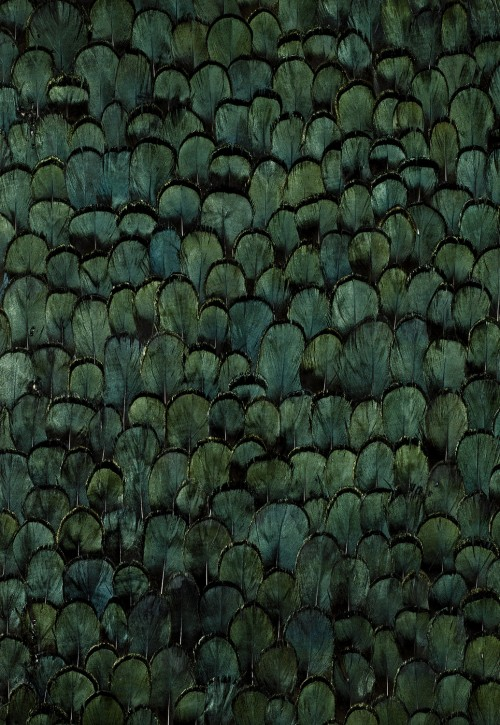 Schumacher-peacock-wallcovering