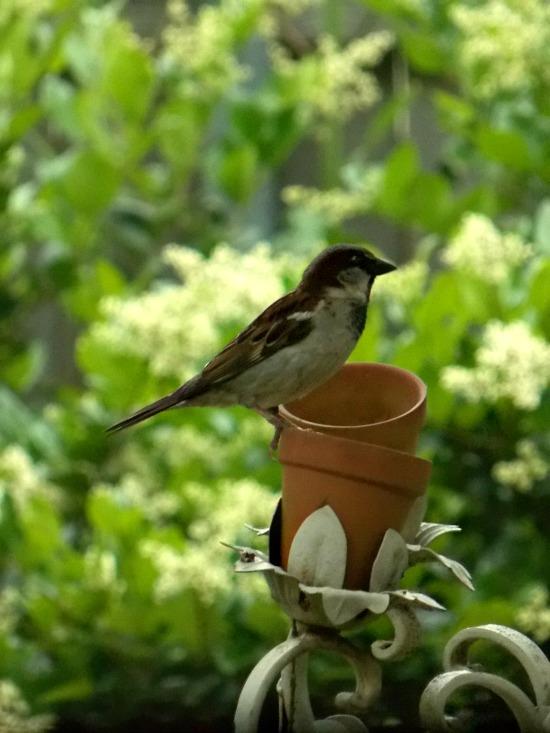 bird-on-feeder