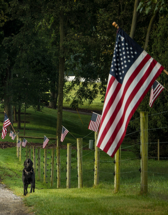 American-flags-on-fence