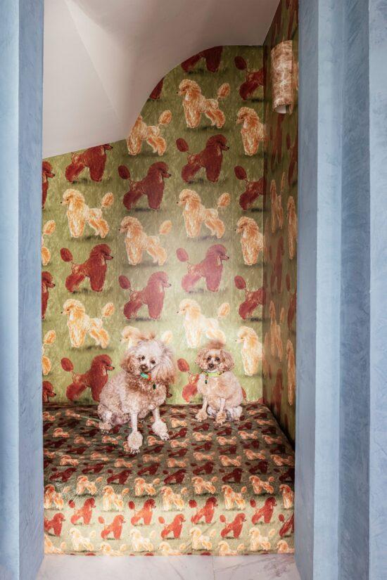 custom-poodle-wallpaper-designer-Travis-London
