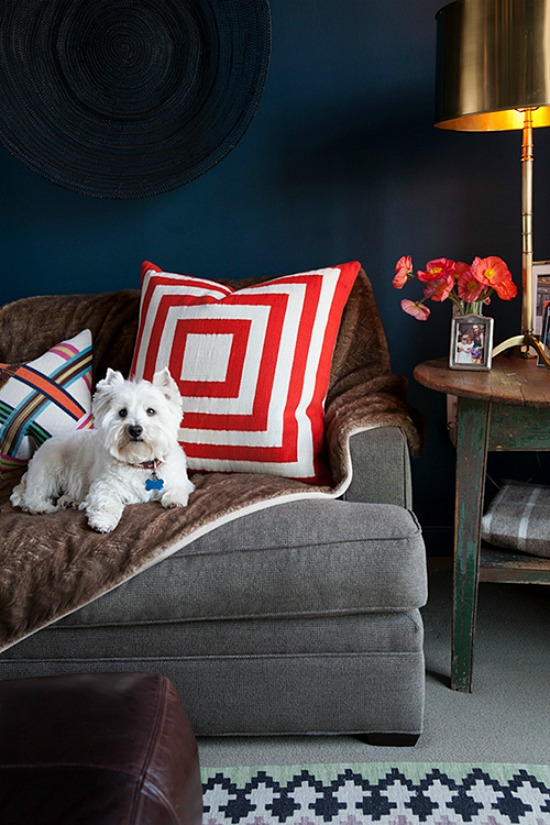 westie on couch