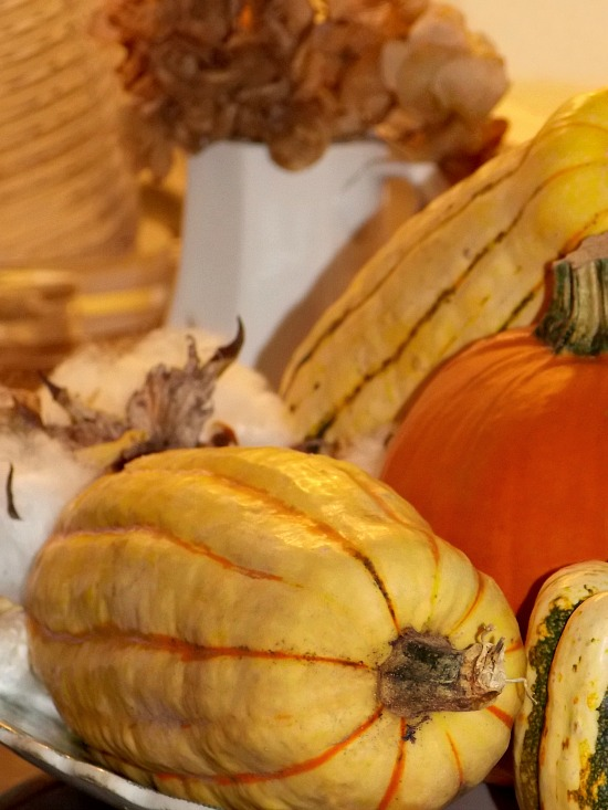 fall-squash