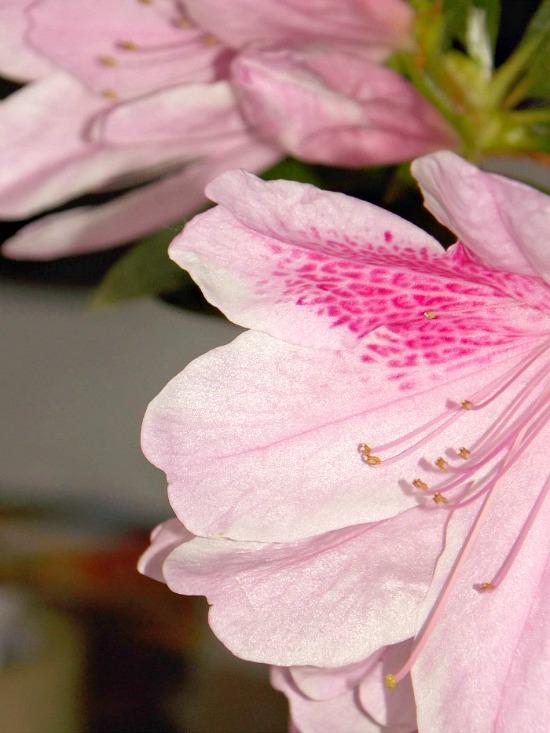 blooming spring curb appeal
