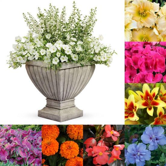 spring-annuals-perennials