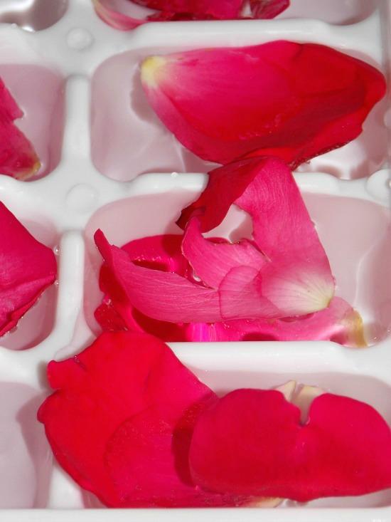 freezing-rose-petals-in-water