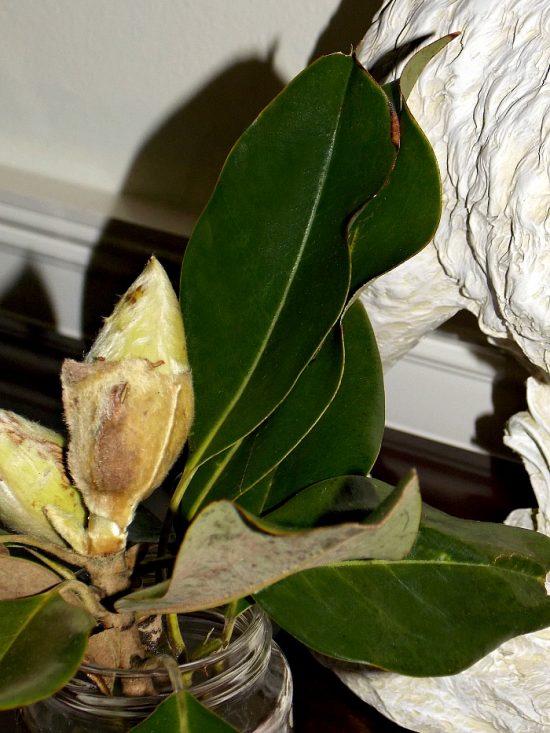 magnolia-leaves