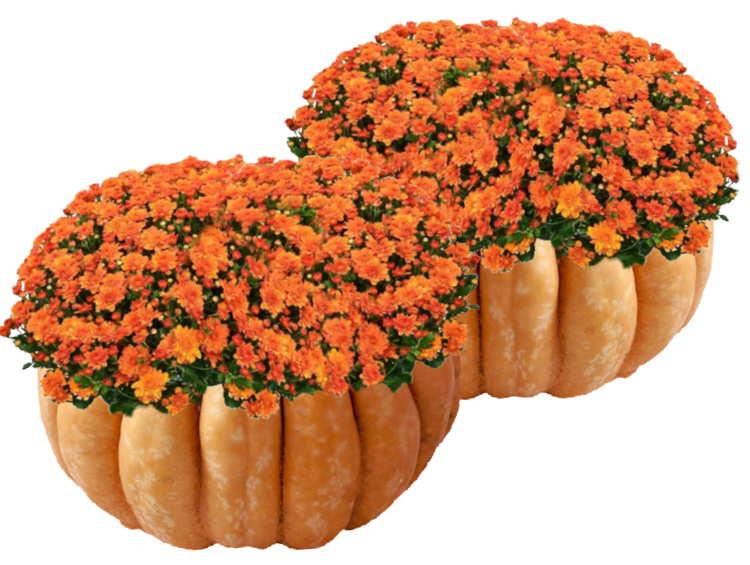mums-in-Cinderella-pumpkin