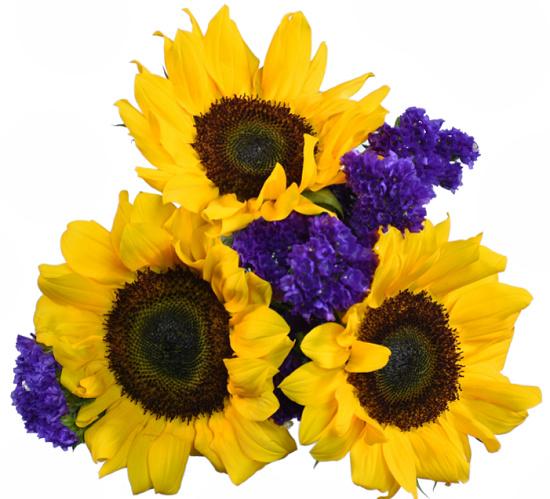 sunflowers-5-stems