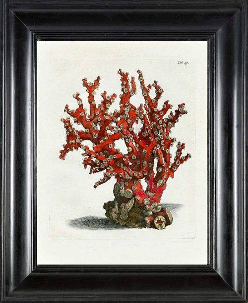 Ellis Art Print 23 Beautiful Antique Sea Ocean Red Coral