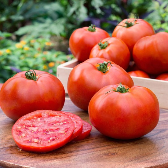tomatoes-garden