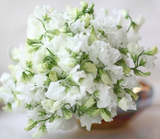 sweet-peas-white