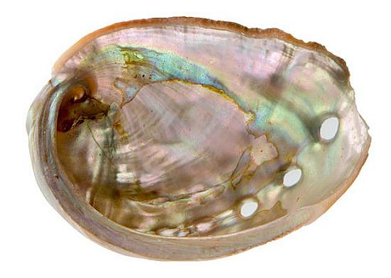 flat shell