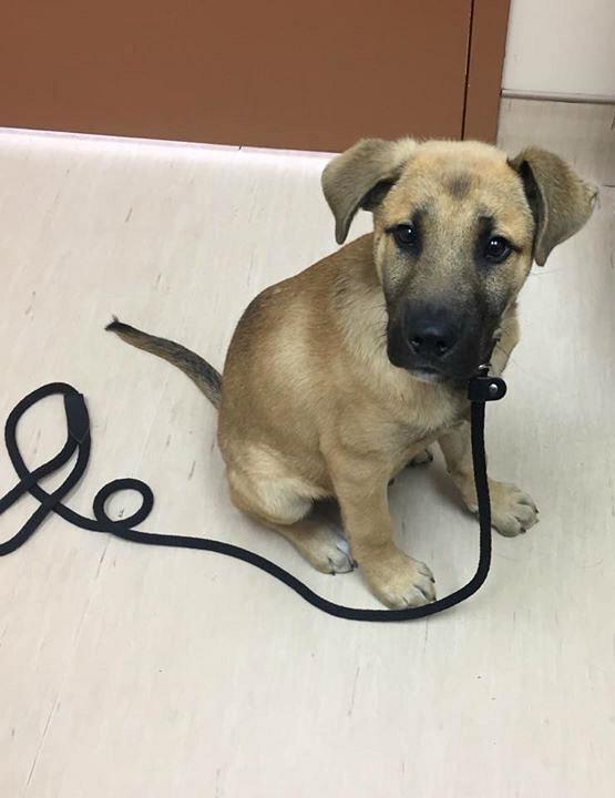 Dallas-puppy