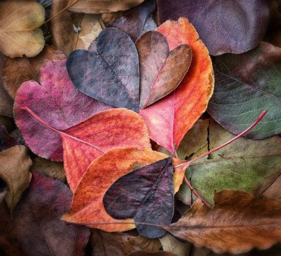 fall-leaves-colors