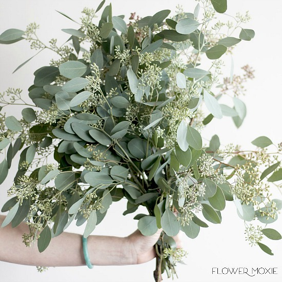 seeded_eucalyptus_bunch