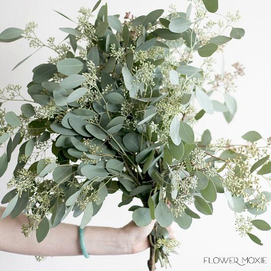 seeded_eucalyptus_bunch