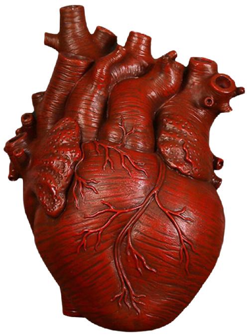 Anatomical-Heart-Shape-Form-Bud-Vase-red